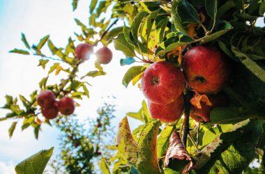 10 prostych sposobów na zdrowe odżywianie